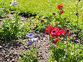 Flowers (9058792879).jpg