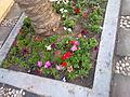 Flowers during winter in kuwiat by irvin calicut (2).jpg