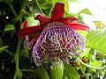 Flowers plants on tree.jpg