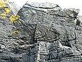 Folded Sandstone - geograph.org.uk - 1393426.jpg
