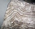 Folded gyprock (Castile Formation, Upper Permian; State Line outcrop, southern Eddy County, New Mexico, USA) 10 (48949977308).jpg