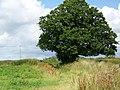 Footpath, Baycliffe Farm - geograph.org.uk - 1388185.jpg