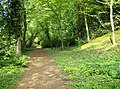 Footpath in Castle Wood - geograph.org.uk - 461572.jpg