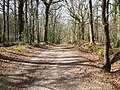 Footpath to the Lymington River - geograph.org.uk - 395761.jpg