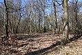 Forêt Départementale de Beauplan à Saint-Rémy-lès-Chevreuse le 14 mars 2018 - 01.jpg