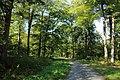 Forêt de Stambruges 15.jpg