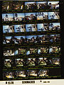 Ford A9339 NLGRF photo contact sheet (1976-04-20)(Gerald Ford Library).jpg