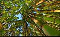 Forest (5626285743).jpg