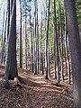 Forest 933.jpg