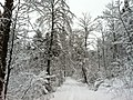 Forest Rüttenen St. Niklaus - panoramio.jpg