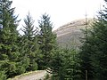 Forest beneath Carnach Mòr - geograph.org.uk - 1041430.jpg