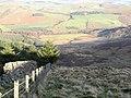 Forest edge - geograph.org.uk - 294485.jpg