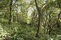 Forest in Mt.Hokyo 06.jpg