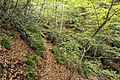 Forest in Mt.Myo 07.jpg