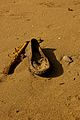 Forgotten shoe in the sands of Laguna de Bay.jpg