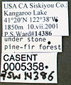 Formica accreta casent0005358 label 1.jpg