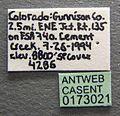 Formica wheeleri casent0173021 label 1.jpg