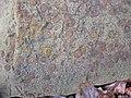 Fossiliferous sandstone (Byer Sandstone, Lower Mississippian; Dugway Outcrop, Newark, Ohio, USA) 3 (32767613125).jpg