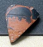 Frammento di coppa attica a figure rosse con testina da rimini, V sec a.c.JPG