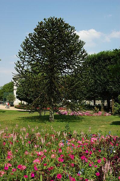 file france orleans jardin des plantes 06 jpg wikimedia commons. Black Bedroom Furniture Sets. Home Design Ideas