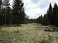 Franzosenwiesen gelegen im Burgwald.jpg
