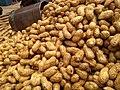 Fresh Peanuts.jpg