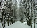 Frombork - park grove in the winter.jpg