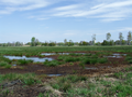 Fuchsberg nature reserve, Cottbus (small marsh).png