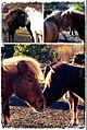 Fun with horses... (8133865377).jpg