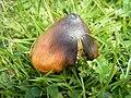 Fungi5564.JPG