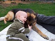 A German Shepherd and a child