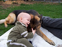 GSD and a baby.jpg