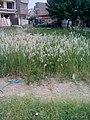 Garden's 18.jpg