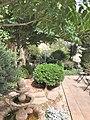 Garden in Amman2.jpg