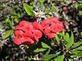 Gardenology.org-IMG 2680 hunt0903.jpg