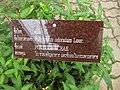 Gardenology.org-IMG 7735 qsbg11mar.jpg