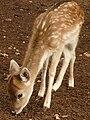 Gaziantep Zoo 1260142.jpg