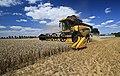 Getreideernte in Sachsen 2H1A7759WI.jpg