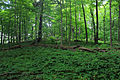 Gfp-pennsylvania-eerie-bluffs-state-park-woods.jpg