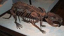 Giant-beaver-fieldmuseum.jpg