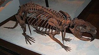 <i>Castoroides</i> genus of mammals