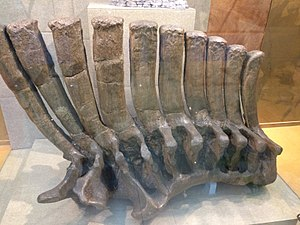 Geological Museum of China - The Shantungosaurus fossil on display.