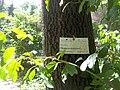 Giardino botanico di Brera (Milan) 189.jpg