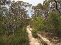 Gibberagong Trail - panoramio (11).jpg