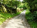 Gill Head track - geograph.org.uk - 1382321.jpg