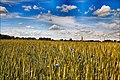Gmina Narew, Poland - panoramio (105).jpg