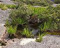 Gnamma, Mt Melville.jpg