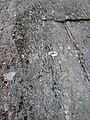 Gneiss (Proterozoic; Port Leyden, western Adirondacks, New York Sate, USA) 1 (39984487725).jpg