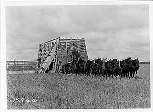 M. L. Wilson - Harvesting - 12-Horse team pulling a header (1923) by M. L. Wilson