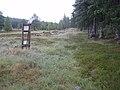 Grassy track, Revack Wood - geograph.org.uk - 1405441.jpg
